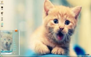 吃惊的黄色小猫咪win7主题